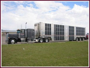 Gibson Freight Transportation Trailer Image 3