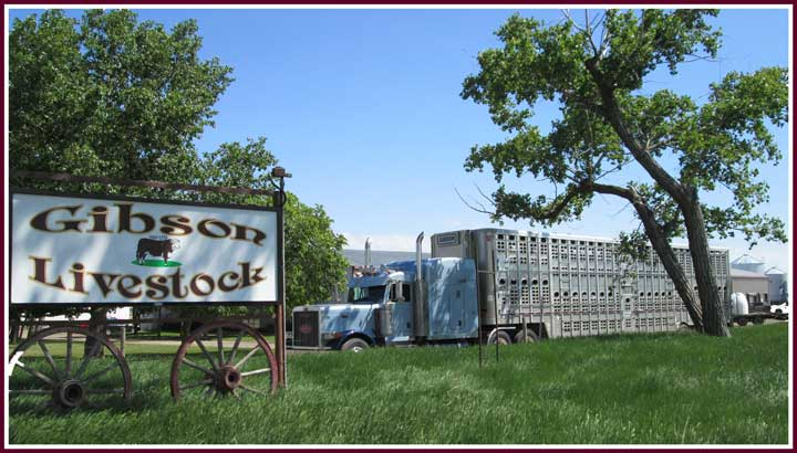 Scenic Image of Gibson Livestock Sign